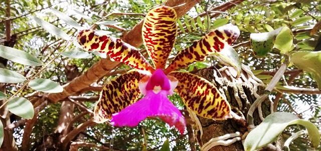 Orquídea 2014 - RP